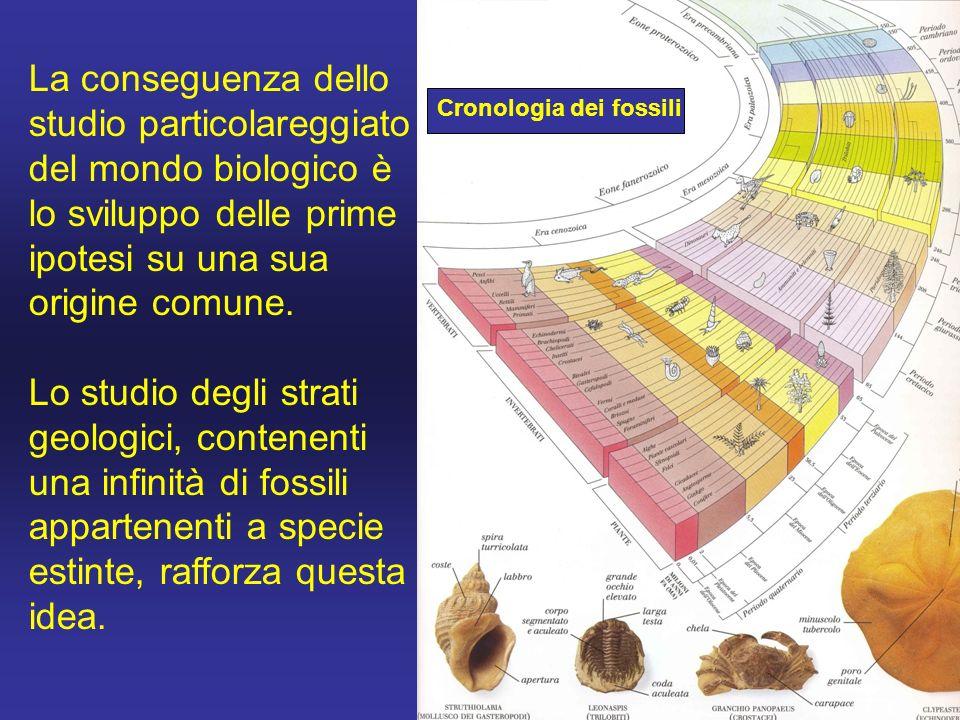 La conseguenza dello studio particolareggiato del mondo biologico è lo sviluppo delle prime ipotesi su una sua origine comune.