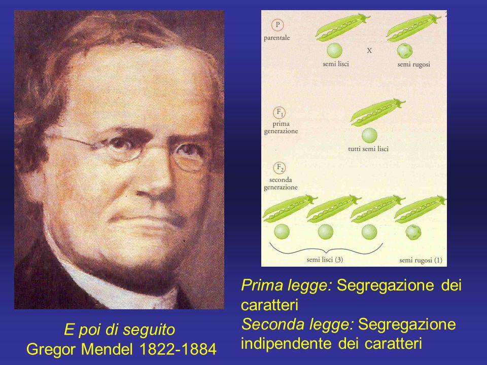 E poi di seguito Gregor Mendel 1822-1884 Prima legge: Segregazione dei caratteri Seconda legge: Segregazione indipendente dei caratteri