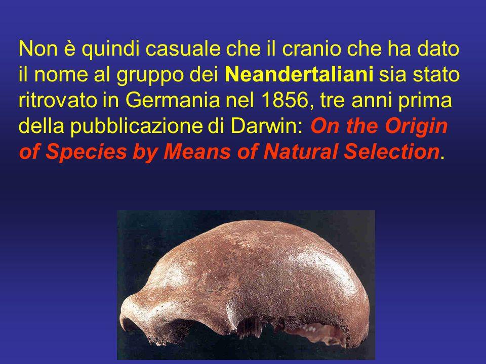 Non è quindi casuale che il cranio che ha dato il nome al gruppo dei Neandertaliani sia stato ritrovato in Germania nel 1856, tre anni prima della pubblicazione di Darwin: On the Origin of Species by Means of Natural Selection.