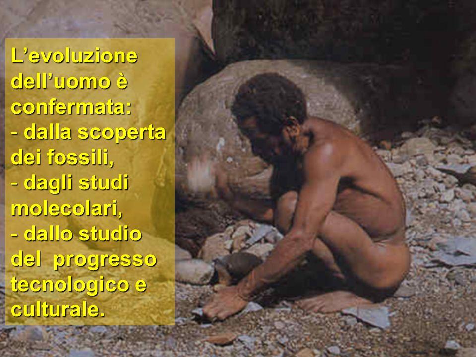 L'evoluzione dell'uomo è confermata: - dalla scoperta dei fossili, - dagli studi molecolari, - dallo studio del progresso tecnologico e culturale.