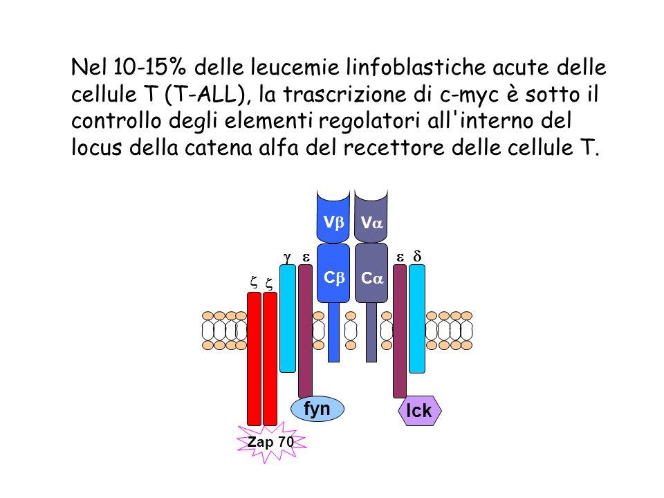 Nel 10-15% delle leucemie linfoblastiche acute delle cellule T (T-ALL), la trascrizione di c-myc è sotto il controllo degli elementi regolatori all'in