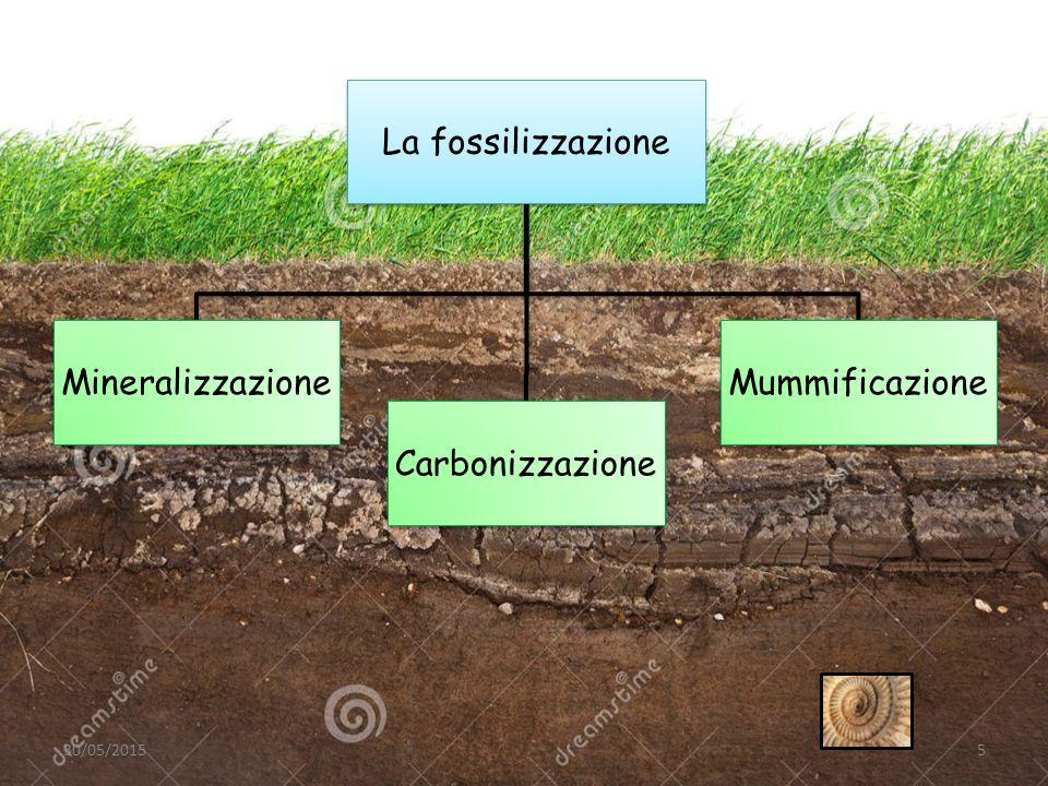 La fossilizzazione Mineralizzazione Carbonizzazione Mummificazione 30/05/20155