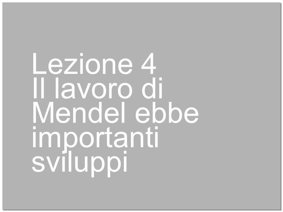 19 Lezione 4 Il lavoro di Mendel ebbe importanti sviluppi