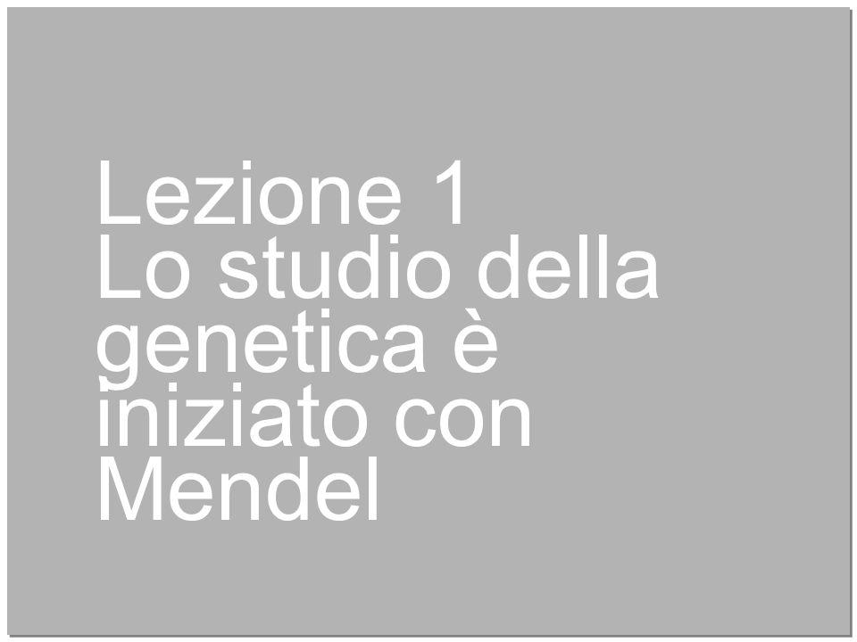 4 Lezione 1 Lo studio della genetica è iniziato con Mendel