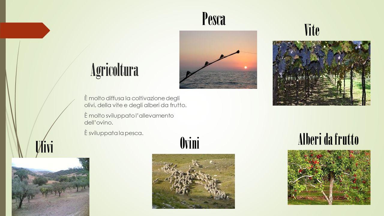 Agricoltura È molto diffusa la coltivazione degli olivi, della vite e degli alberi da frutto. È molto sviluppato l'allevamento dell'ovino. È sviluppat