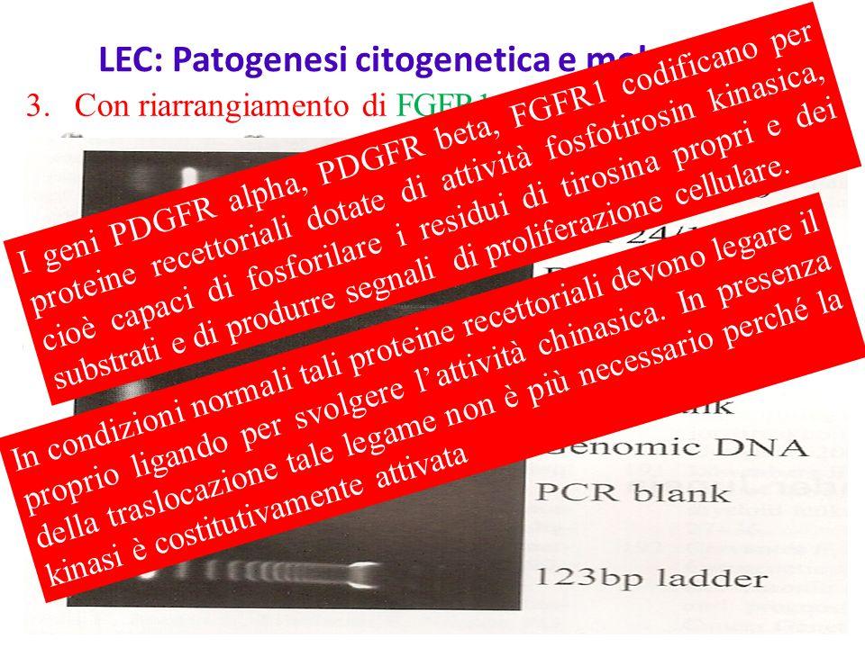 LEC: Patogenesi citogenetica e molecolare 1.Con riarrangiamento di PDGFR alpha, mappato in 4q12 Del(4)(q12) FIP1L1/PDGFRA 2.Con riarragiamento di PDGFR beta, mappato in 5q333.Con riarrangiamento di FGFR1, mappato in 8p11 I geni PDGFR alpha, PDGFR beta, FGFR1 codificano per proteine recettoriali dotate di attività fosfotirosin kinasica, cioè capaci di fosforilare i residui di tirosina propri e dei substrati e di produrre segnali di proliferazione cellulare.