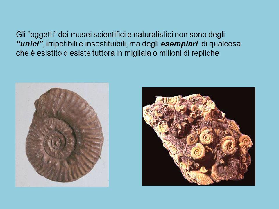 """Gli """"oggetti"""" dei musei scientifici e naturalistici non sono degli """"unici"""", irripetibili e insostituibili, ma degli esemplari di qualcosa che è esisti"""