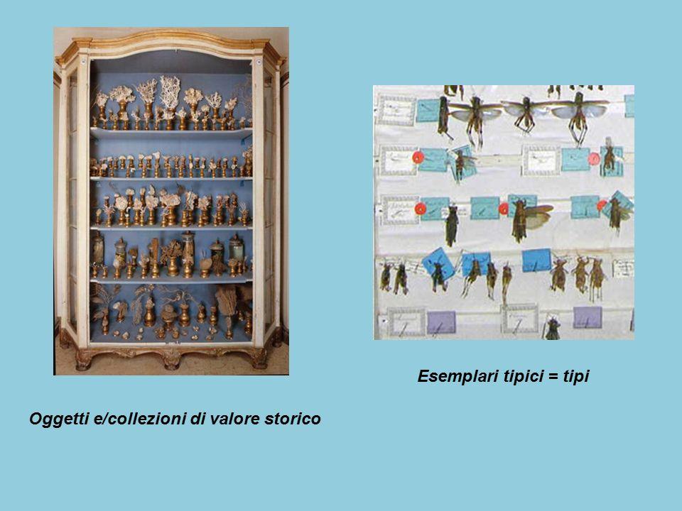 Oggetti e/collezioni di valore storico Esemplari tipici = tipi