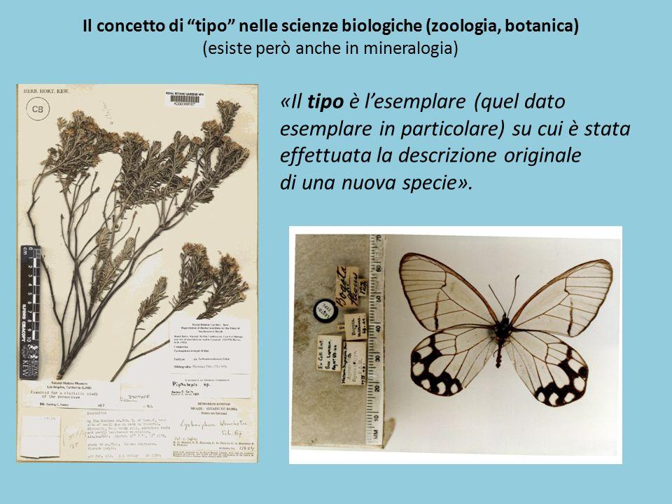 """«Il tipo è l'esemplare (quel dato esemplare in particolare) su cui è stata effettuata la descrizione originale di una nuova specie». Il concetto di """"t"""