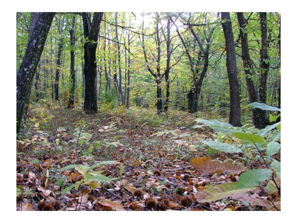 Le nostre sensazioni nel bosco Sensazione di pace, di tranquillità Malinconia, tristezza