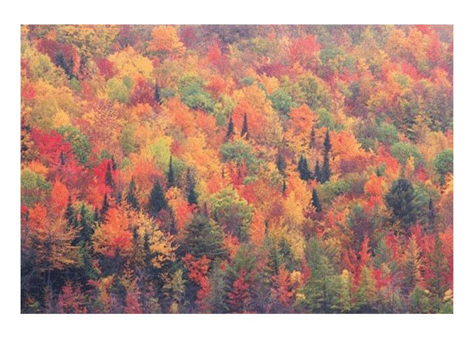 Per fare una descrizione del bosco è necessario prima raccogliere tutte le informazioni.
