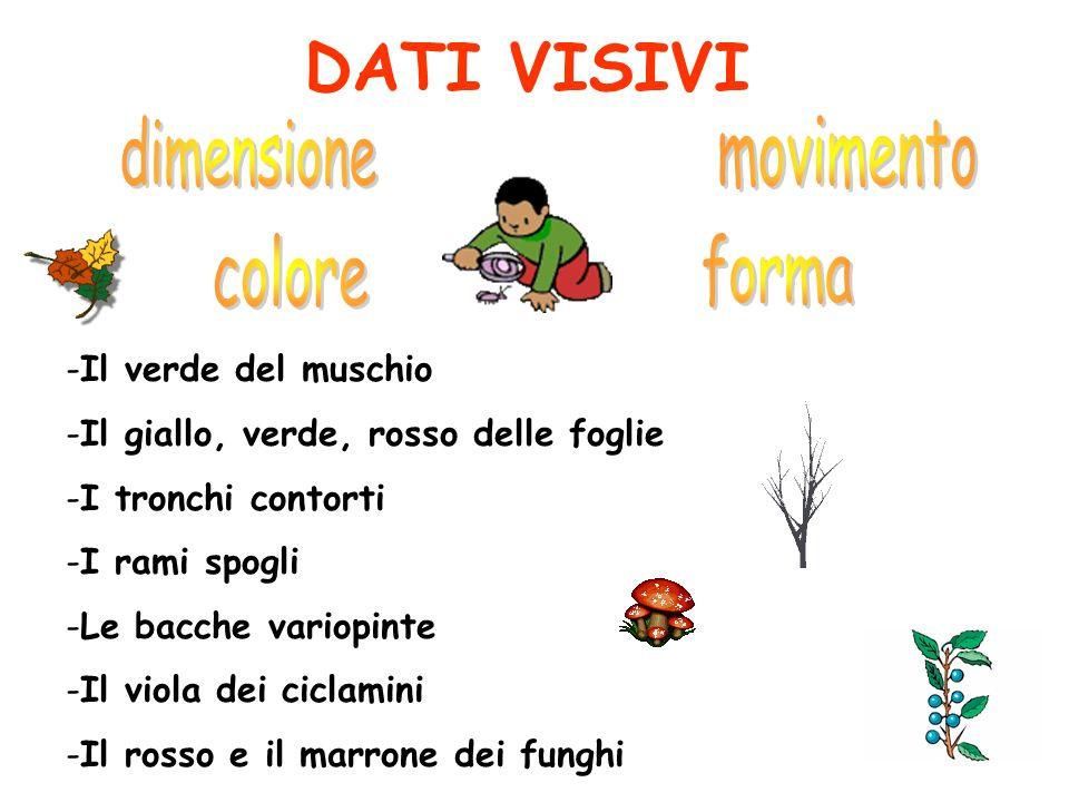 DATI VISIVI -Il verde del muschio -Il giallo, verde, rosso delle foglie -I tronchi contorti -I rami spogli -Le bacche variopinte -Il viola dei ciclamini -Il rosso e il marrone dei funghi