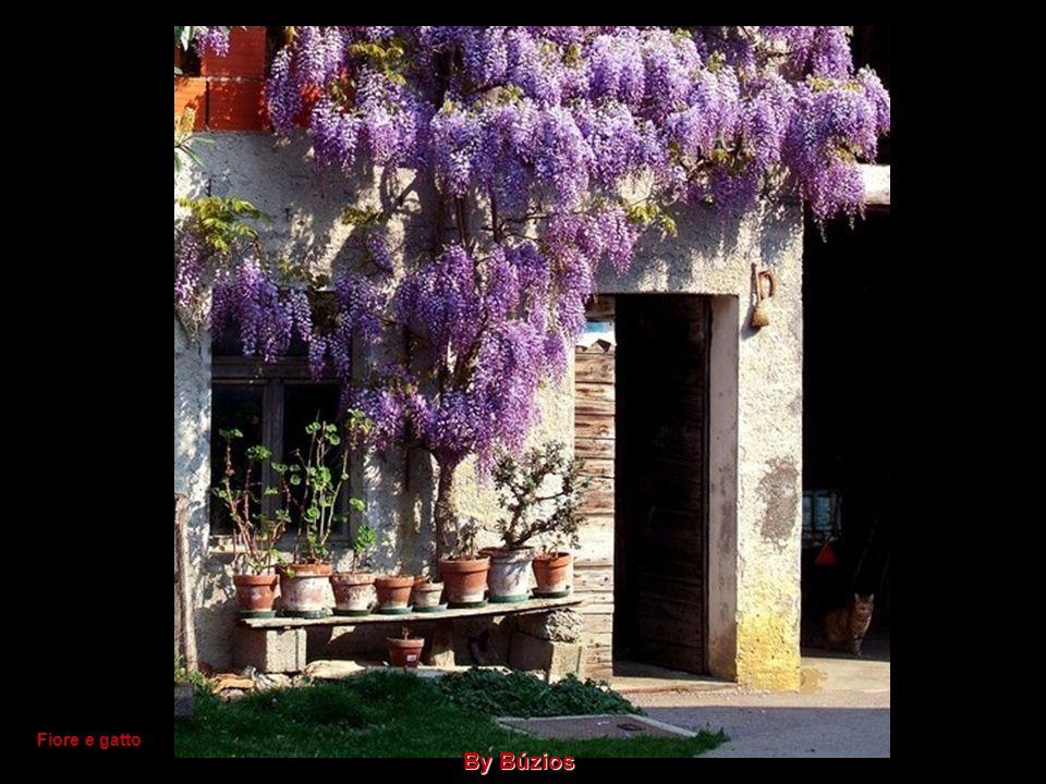 Fiore e gatto By Búzios