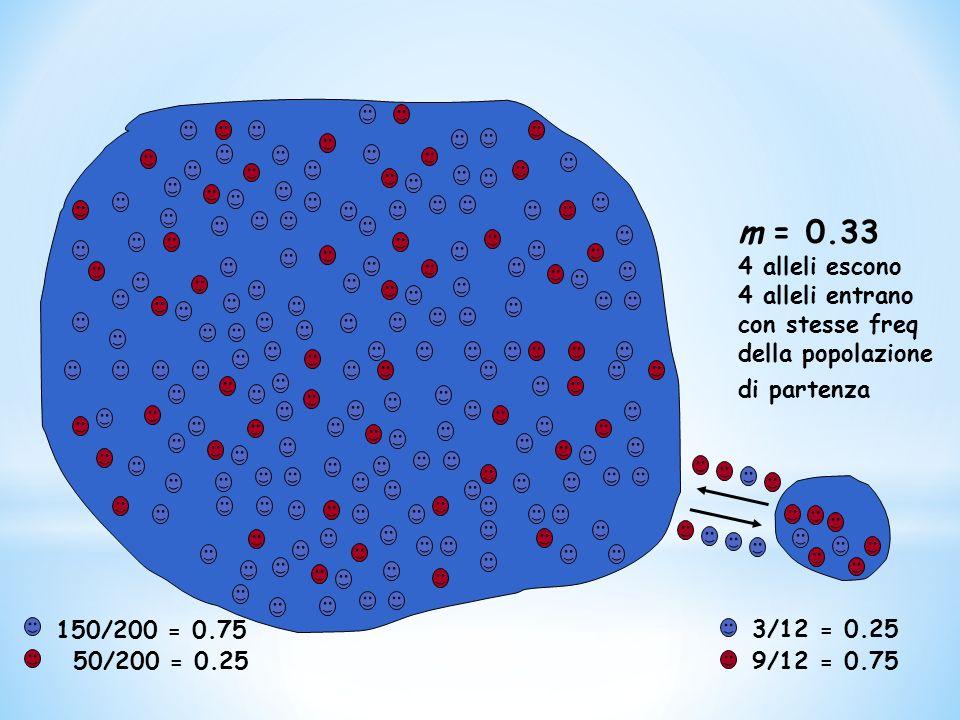 150/200 = 0.75 50/200 = 0.25 3/12 = 0.25 9/12 = 0.75 m = 0.33 4 alleli escono 4 alleli entrano con stesse freq della popolazione di partenza