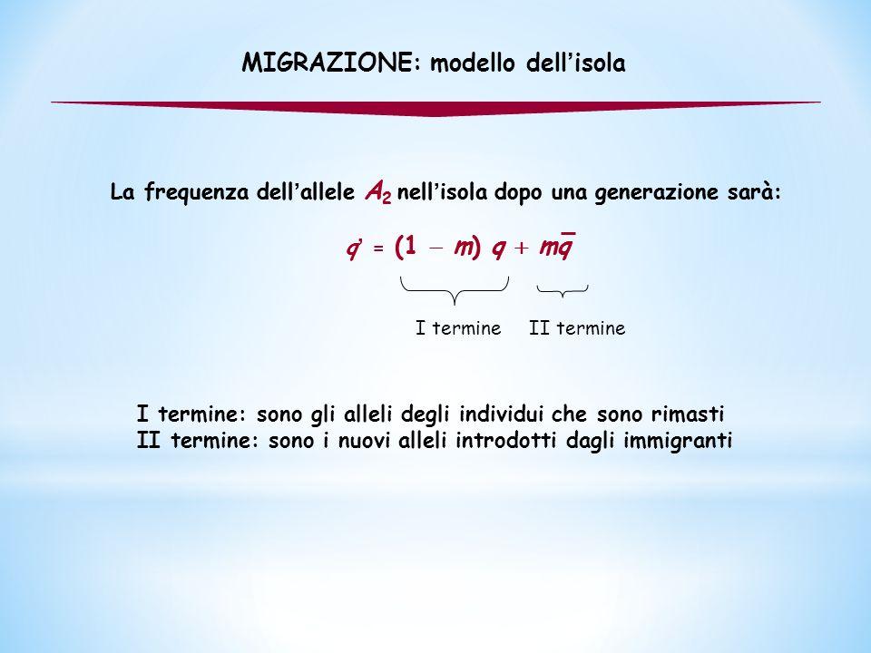 La frequenza dell ' allele A 2 nell ' isola dopo una generazione sarà: q ' = (1  m) q  mq La frequenza dell ' allele A 2 nell ' isola dopo una gener