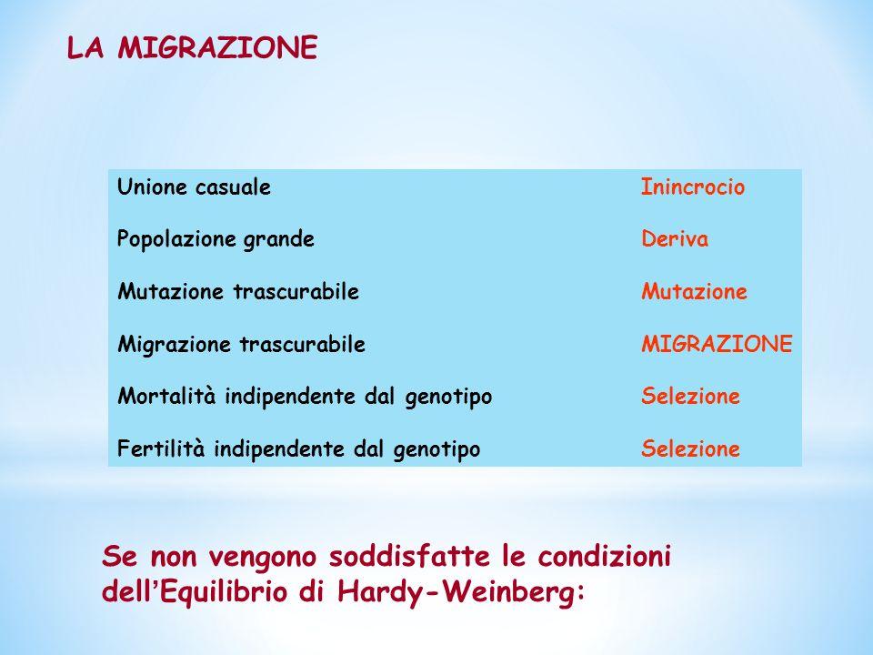 Se non vengono soddisfatte le condizioni dell ' Equilibrio di Hardy-Weinberg: Unione casualeInincrocio Popolazione grandeDeriva Mutazione trascurabileMutazione Migrazione trascurabileMIGRAZIONE Mortalità indipendente dal genotipoSelezione Fertilità indipendente dal genotipoSelezione LA MIGRAZIONE