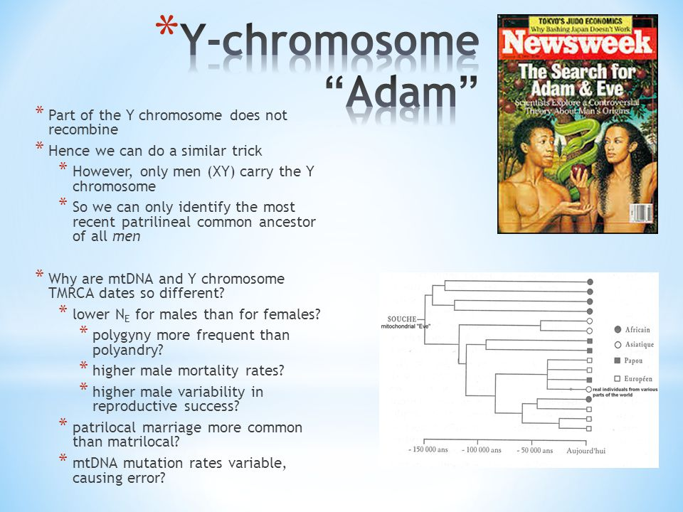 * Part of the Y chromosome does not recombine * Hence we can do a similar trick * However, only men (XY) carry the Y chromosome * So we can only identify the most recent patrilineal common ancestor of all men * Why are mtDNA and Y chromosome TMRCA dates so different.