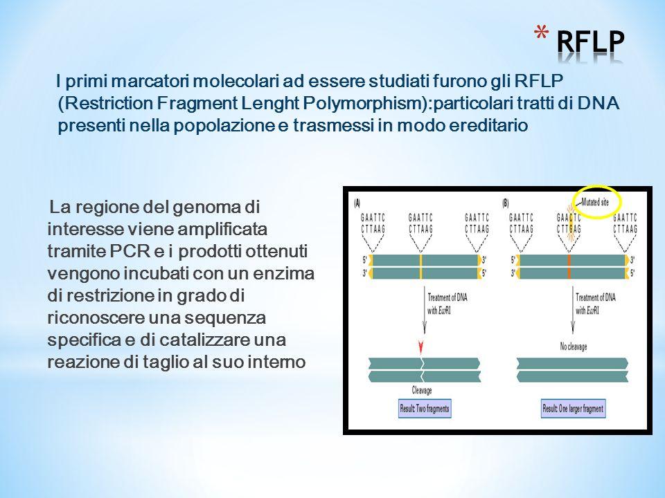 La regione del genoma di interesse viene amplificata tramite PCR e i prodotti ottenuti vengono incubati con un enzima di restrizione in grado di riconoscere una sequenza specifica e di catalizzare una reazione di taglio al suo interno I primi marcatori molecolari ad essere studiati furono gli RFLP (Restriction Fragment Lenght Polymorphism):particolari tratti di DNA presenti nella popolazione e trasmessi in modo ereditario