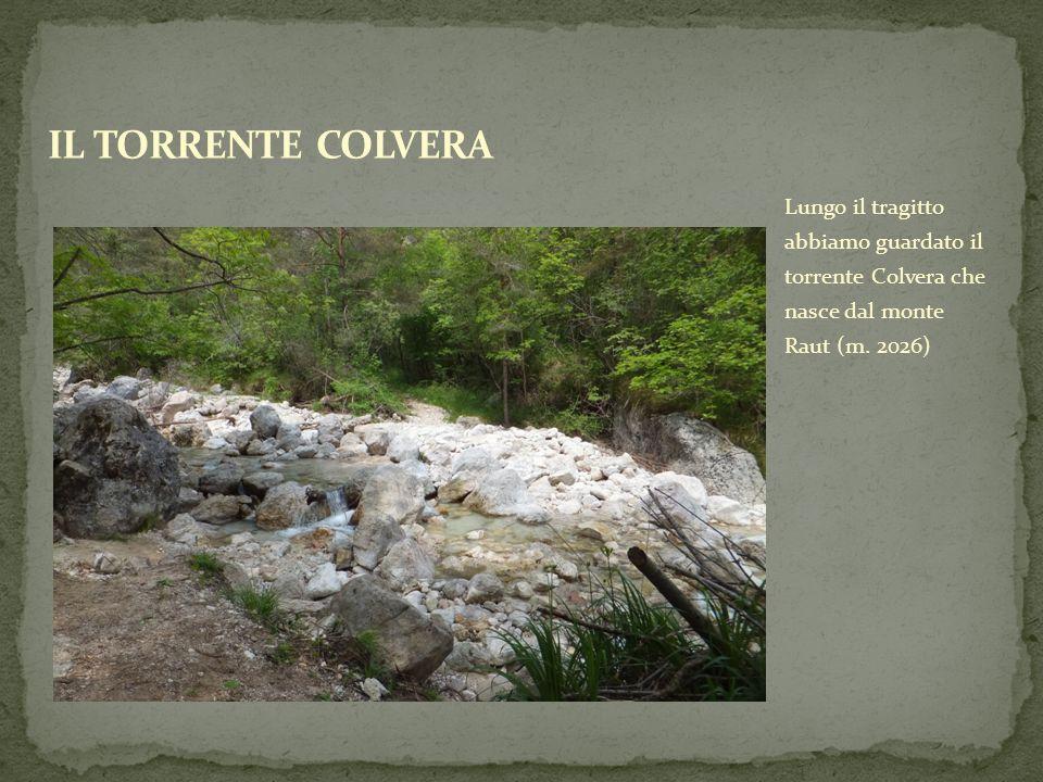 Lungo il tragitto abbiamo guardato il torrente Colvera che nasce dal monte Raut (m. 2026)