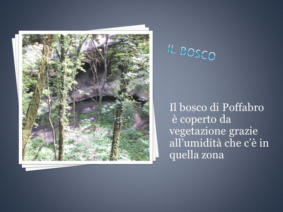 Il bosco di Poffabro è coperto da vegetazione grazie all'umidità che c'è in quella zona