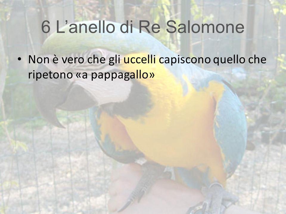 6 L'anello di Re Salomone Non è vero che gli uccelli capiscono quello che ripetono «a pappagallo»