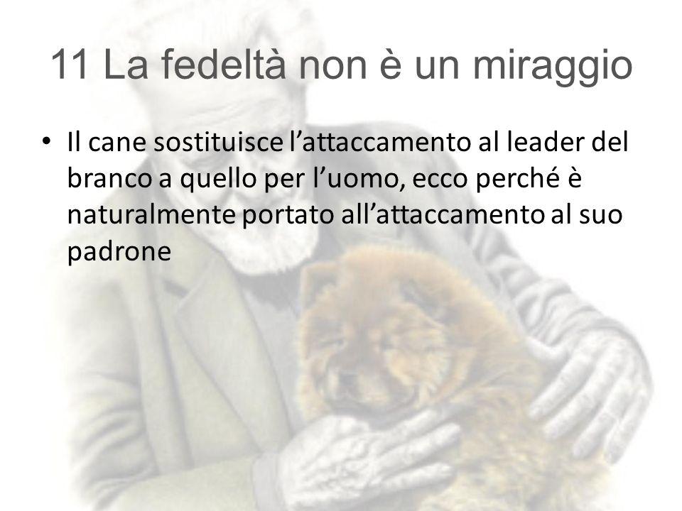11 La fedeltà non è un miraggio Il cane sostituisce l'attaccamento al leader del branco a quello per l'uomo, ecco perché è naturalmente portato all'at