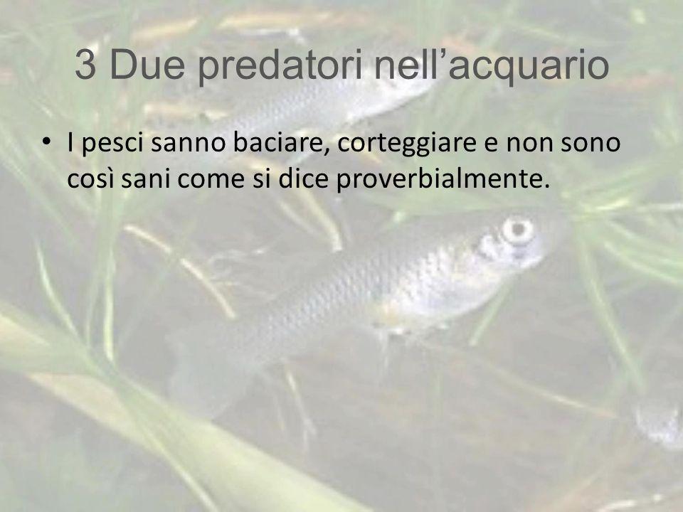 3 Due predatori nell'acquario I pesci sanno baciare, corteggiare e non sono così sani come si dice proverbialmente.