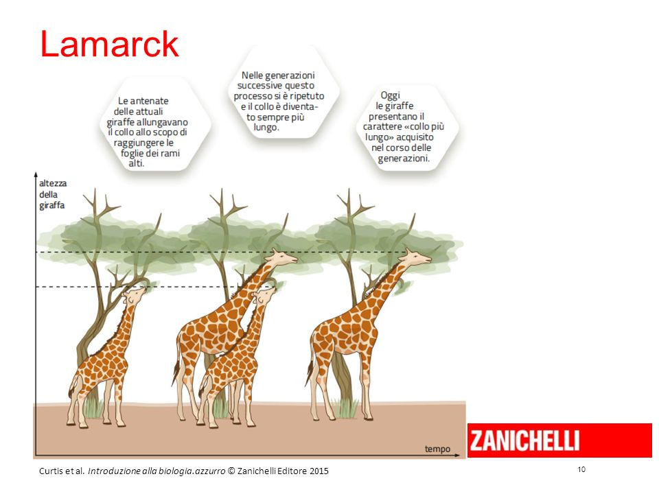 10 Curtis et al. Introduzione alla biologia.azzurro © Zanichelli Editore 2015 Lamarck