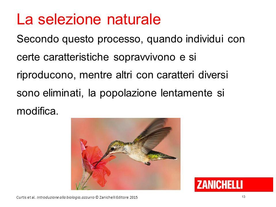 13 Curtis et al. Introduzione alla biologia.azzurro © Zanichelli Editore 2015 La selezione naturale Secondo questo processo, quando individui con cert