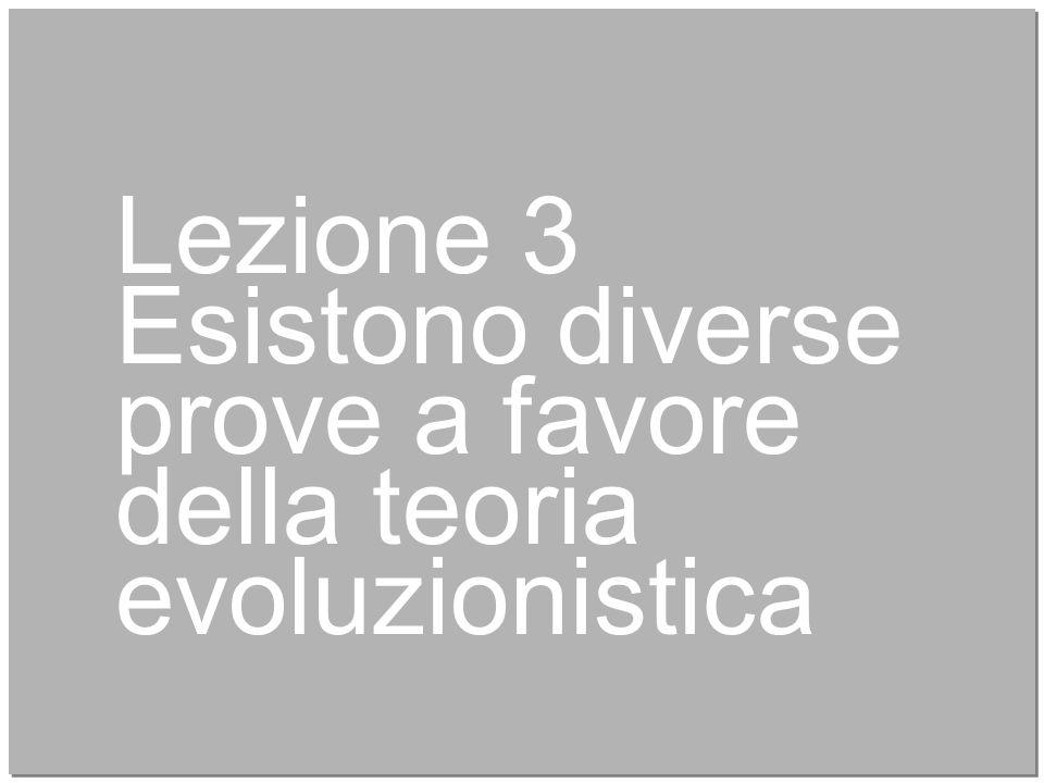 17 Lezione 3 Esistono diverse prove a favore della teoria evoluzionistica