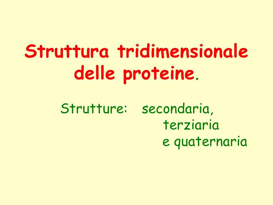 Struttura tridimensionale delle proteine. Strutture: secondaria, terziaria e quaternaria