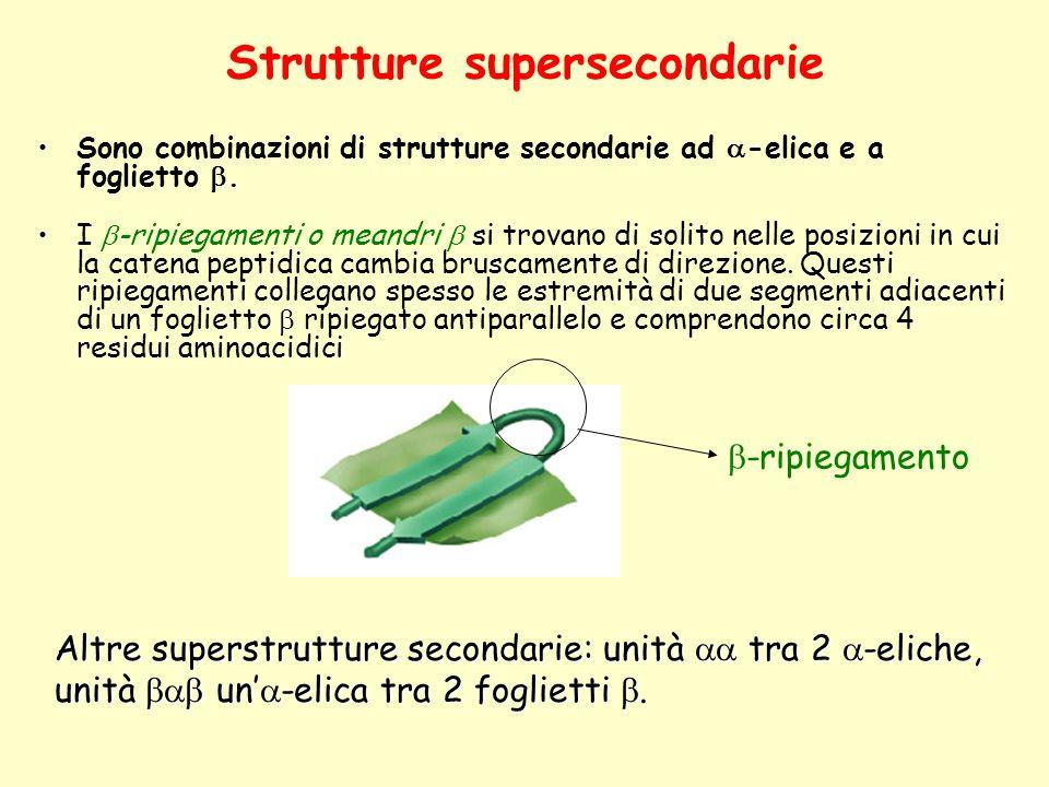 Strutture supersecondarie Sono combinazioni di strutture secondarie ad  -elica e a foglietto . I  -ripiegamenti o meandri  si trovano di solito ne