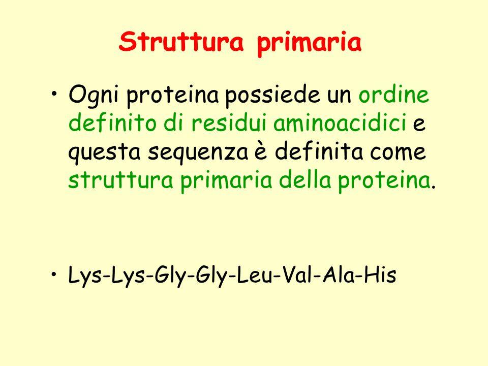 Struttura primaria Ogni proteina possiede un ordine definito di residui aminoacidici e questa sequenza è definita come struttura primaria della proteina.