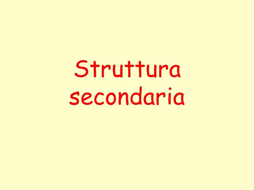 Struttura secondaria