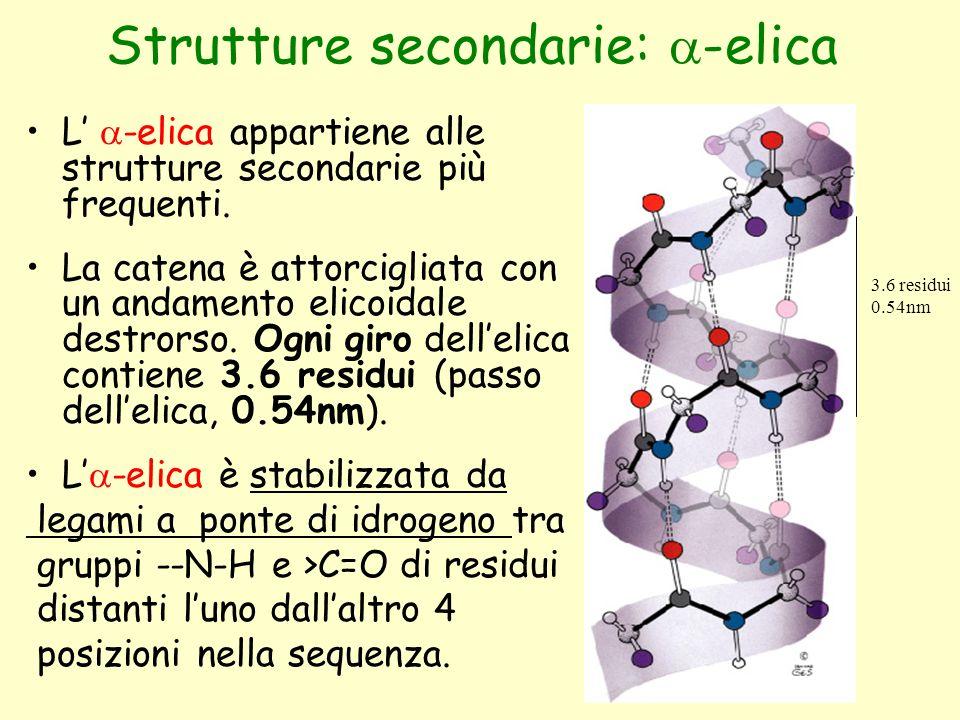 Strutture secondarie:  -elica L'  -elica appartiene alle strutture secondarie più frequenti. La catena è attorcigliata con un andamento elicoidale d