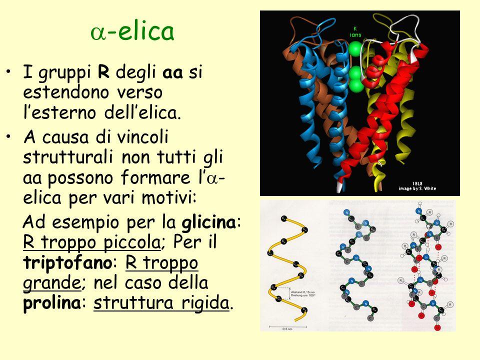  -elica I gruppi R degli aa si estendono verso l'esterno dell'elica. A causa di vincoli strutturali non tutti gli aa possono formare l'  - elica per