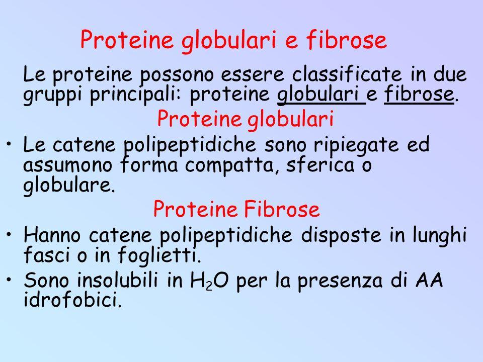 Proteine globulari e fibrose Le proteine possono essere classificate in due gruppi principali: proteine globulari e fibrose. Proteine globulari Le cat