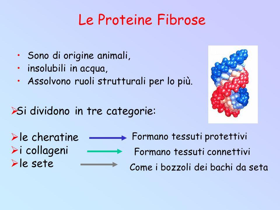 Le Proteine Fibrose Sono di origine animali, insolubili in acqua, Assolvono ruoli strutturali per lo più.  Si dividono in tre categorie:  le cherati