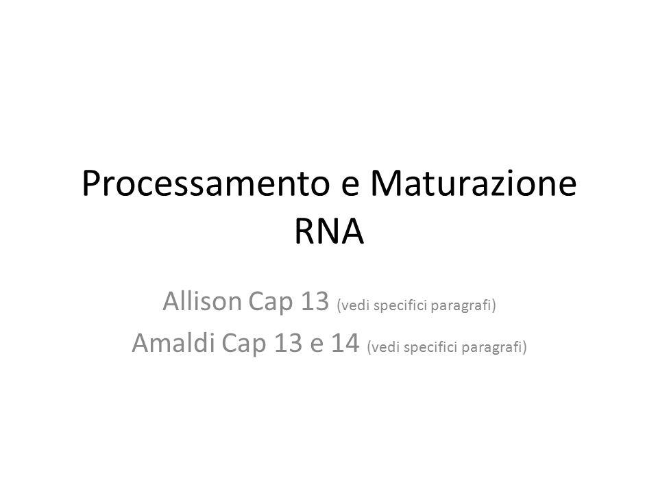 Processamento e Maturazione RNA Allison Cap 13 (vedi specifici paragrafi) Amaldi Cap 13 e 14 (vedi specifici paragrafi)