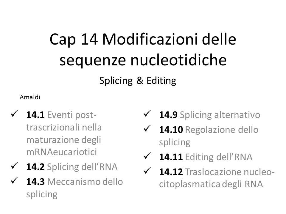 Cap 14 Modificazioni delle sequenze nucleotidiche 14.1 Eventi post- trascrizionali nella maturazione degli mRNAeucariotici 14.2 Splicing dell'RNA 14.3