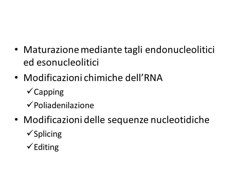 Maturazione mediante tagli endonucleolitici ed esonucleolitici Modificazioni chimiche dell'RNA Capping Poliadenilazione Modificazioni delle sequenze n