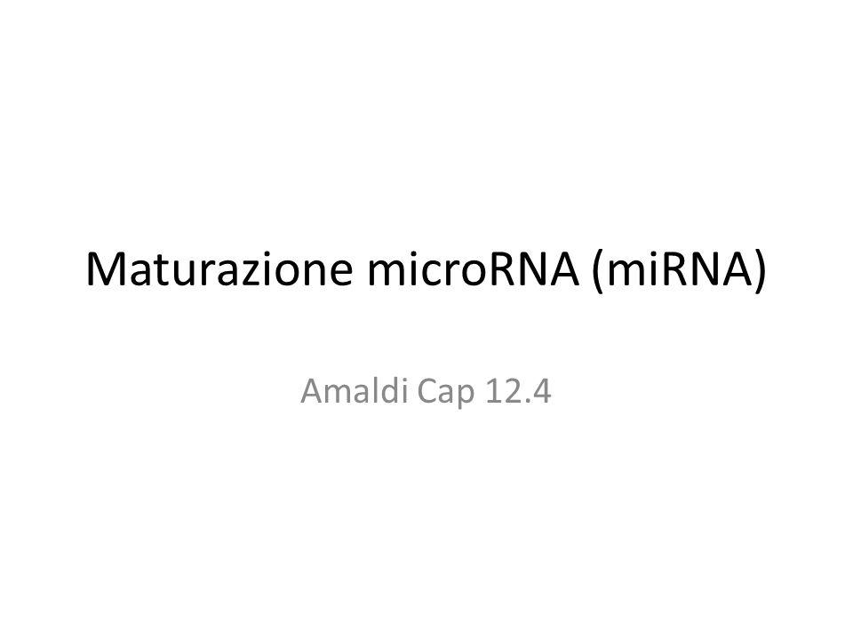 Maturazione microRNA (miRNA) Amaldi Cap 12.4