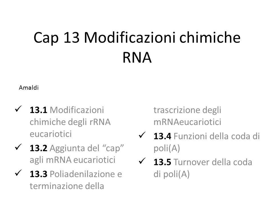 """Cap 13 Modificazioni chimiche RNA 13.1 Modificazioni chimiche degli rRNA eucariotici 13.2 Aggiunta del """"cap"""" agli mRNA eucariotici 13.3 Poliadenilazio"""
