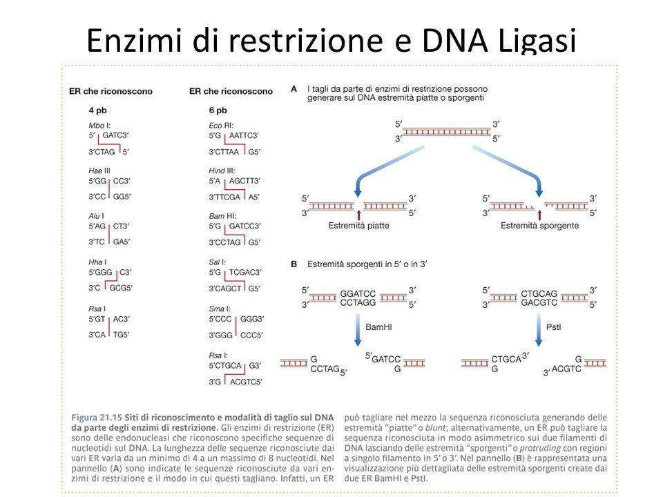 Enzimi di restrizione e DNA Ligasi