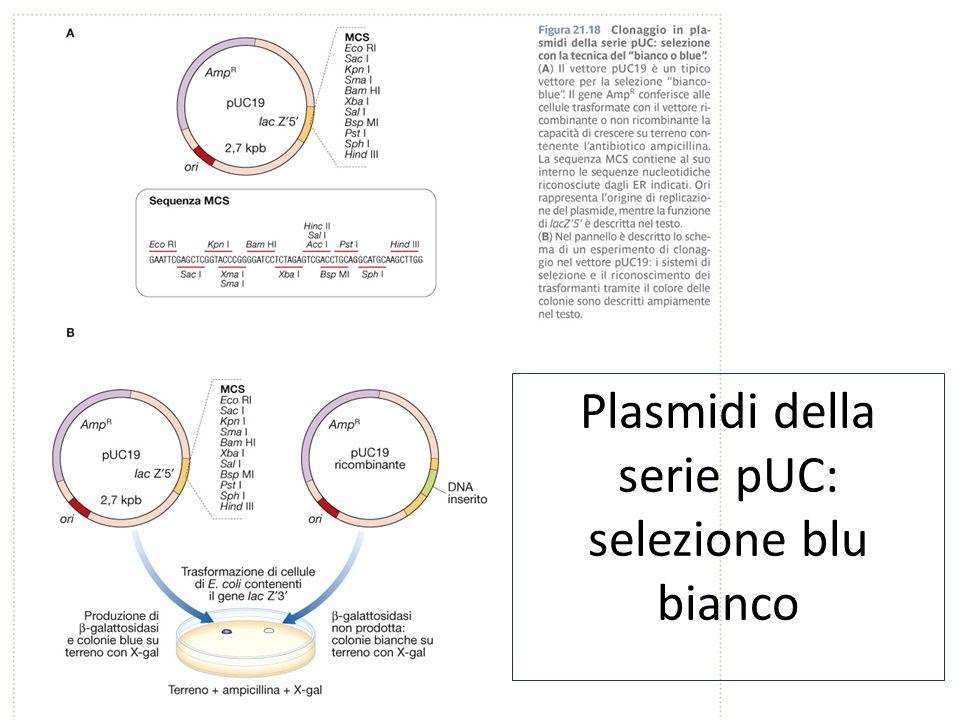 Plasmidi della serie pUC: selezione blu bianco