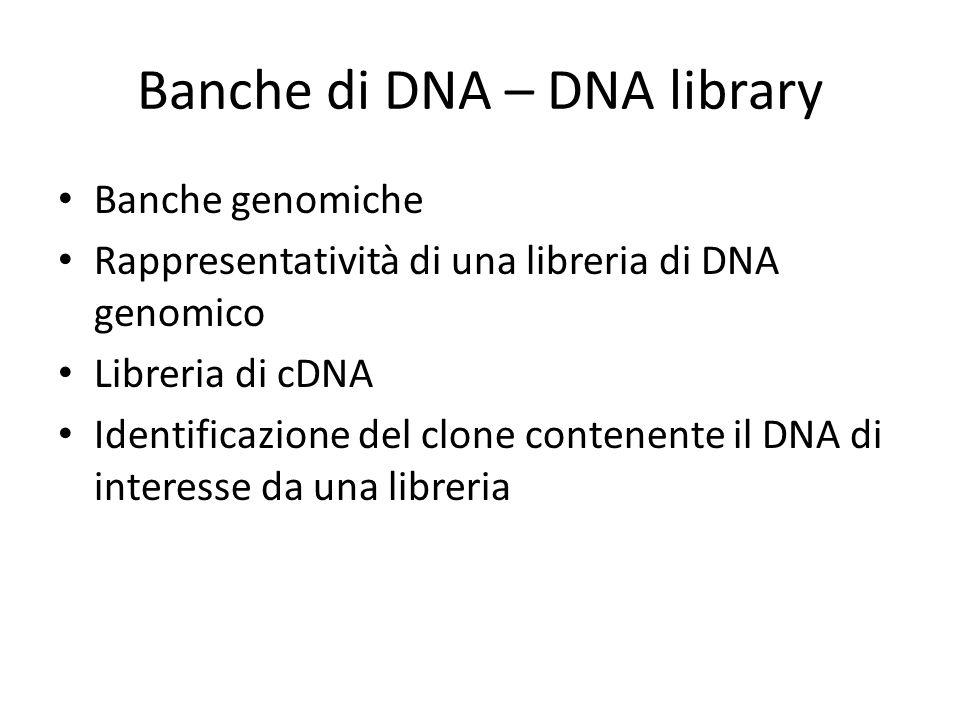 Banche di DNA – DNA library Banche genomiche Rappresentatività di una libreria di DNA genomico Libreria di cDNA Identificazione del clone contenente i