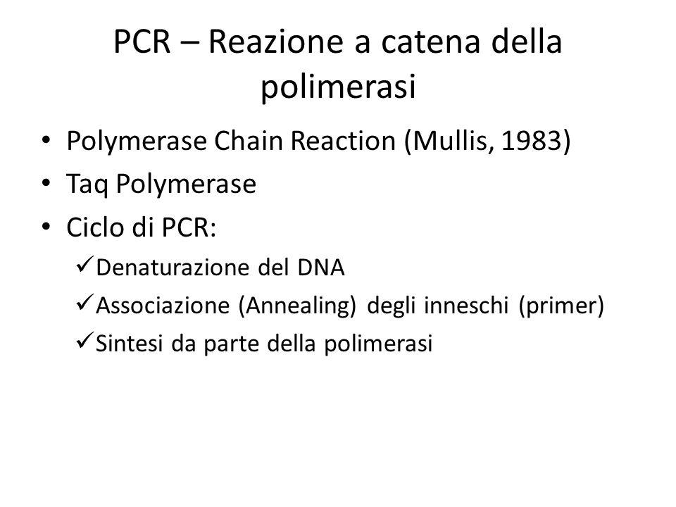 PCR – Reazione a catena della polimerasi Polymerase Chain Reaction (Mullis, 1983) Taq Polymerase Ciclo di PCR: Denaturazione del DNA Associazione (Ann