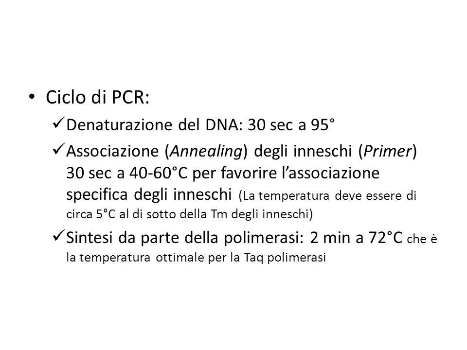 Ciclo di PCR: Denaturazione del DNA: 30 sec a 95° Associazione (Annealing) degli inneschi (Primer) 30 sec a 40-60°C per favorire l'associazione specif
