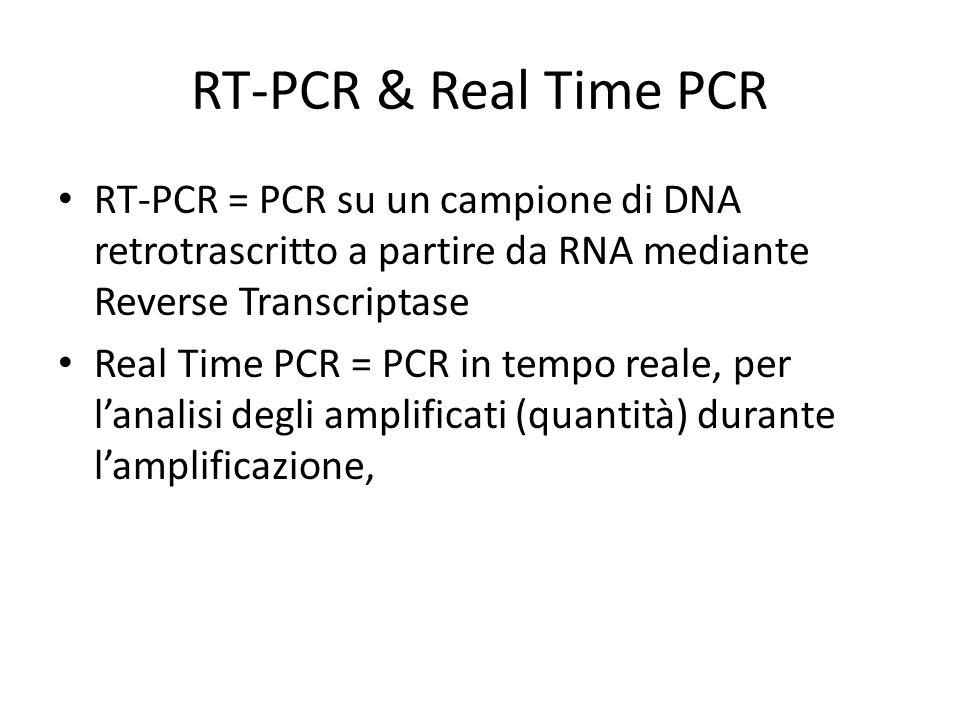 RT-PCR & Real Time PCR RT-PCR = PCR su un campione di DNA retrotrascritto a partire da RNA mediante Reverse Transcriptase Real Time PCR = PCR in tempo