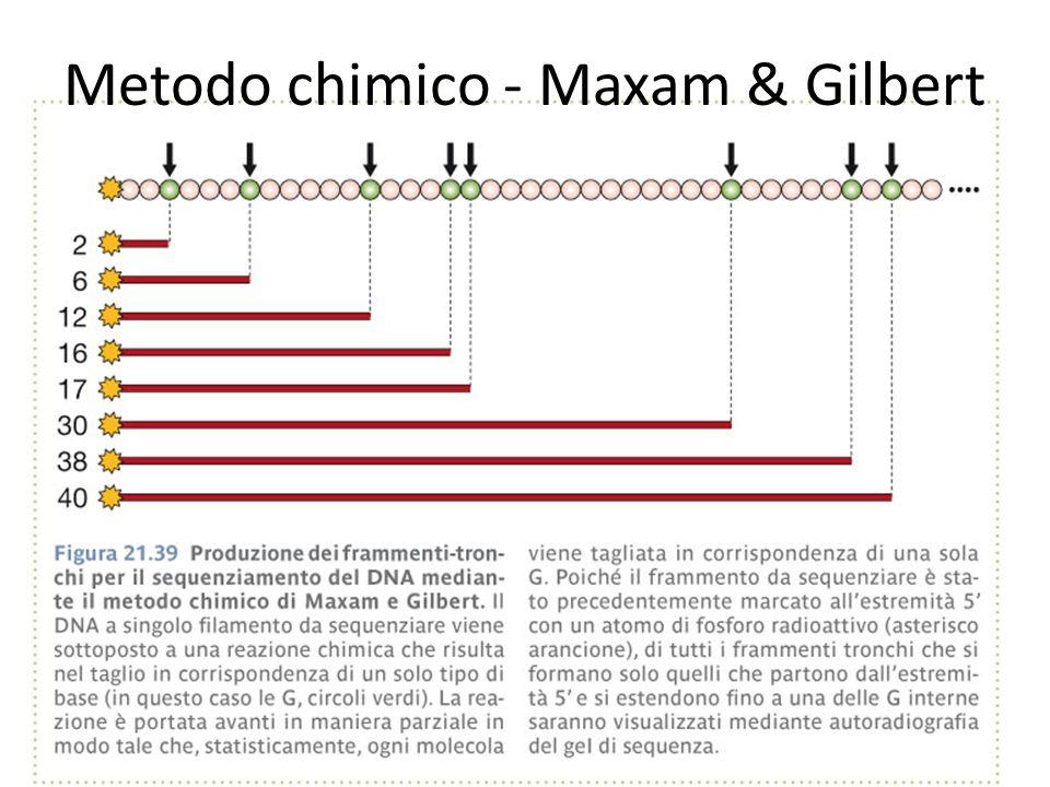 Metodo chimico - Maxam & Gilbert